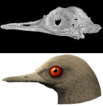 scansione oculudentavis (dinosauro uccello)