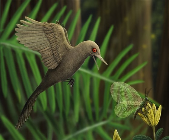 Oculudentavis khaungraae (dinosauro uccello)
