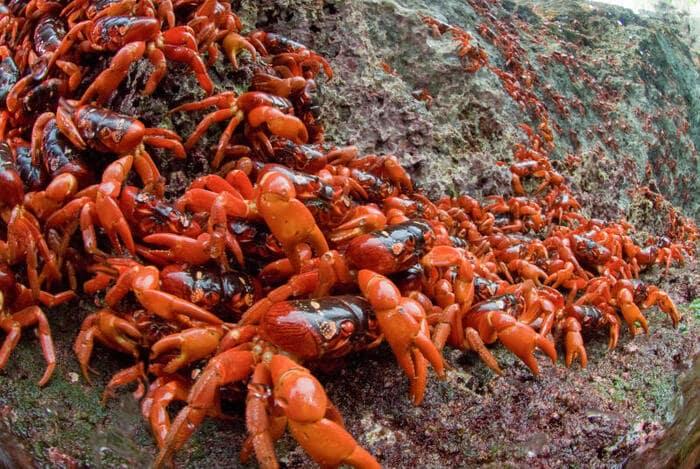 10 cose che (forse) non sai sulle migrazioni degli animali