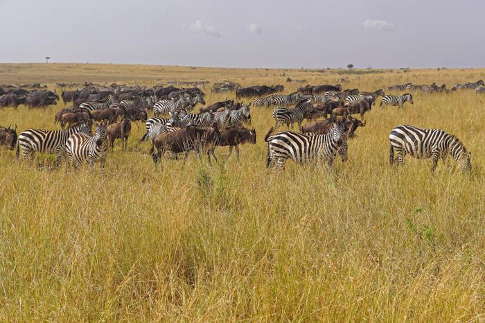 Migrazioni degli animali