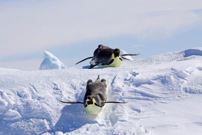 Atleti a quattro zampe: gli sport invernali degli animali