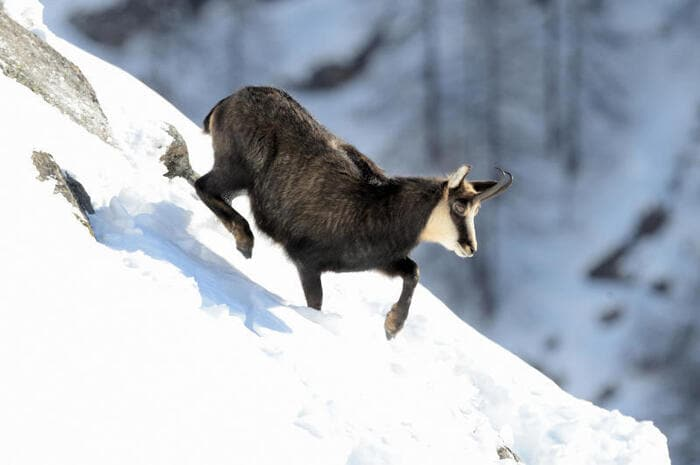 sport invernali per animali