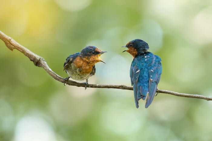 Come comunicano gli animali?