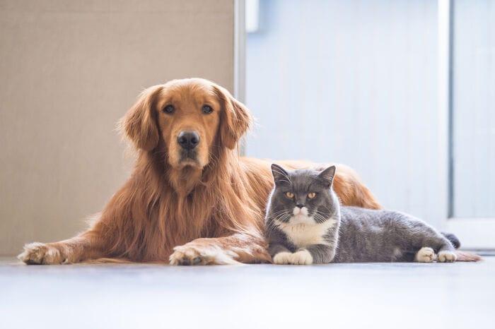 Gli animali domestici trasmettono il coronavirus?