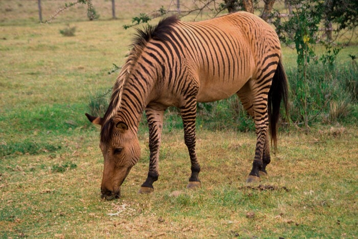 Animali strani: cosa sono gli ibridi?