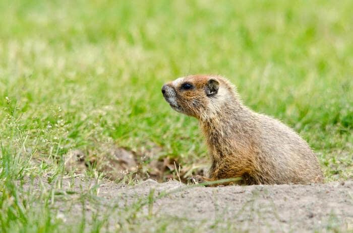 Natura e Primavera: come fanno gli animali a capire che è ora di svegliarsi dal letargo?