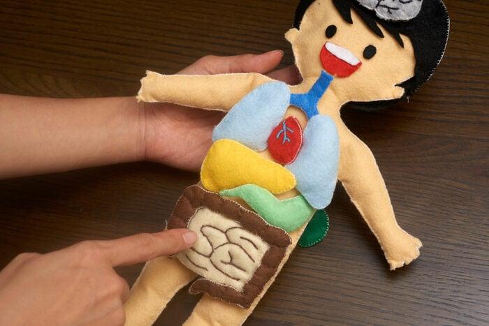 Il viaggio del cibo nel corpo umano: la digestione