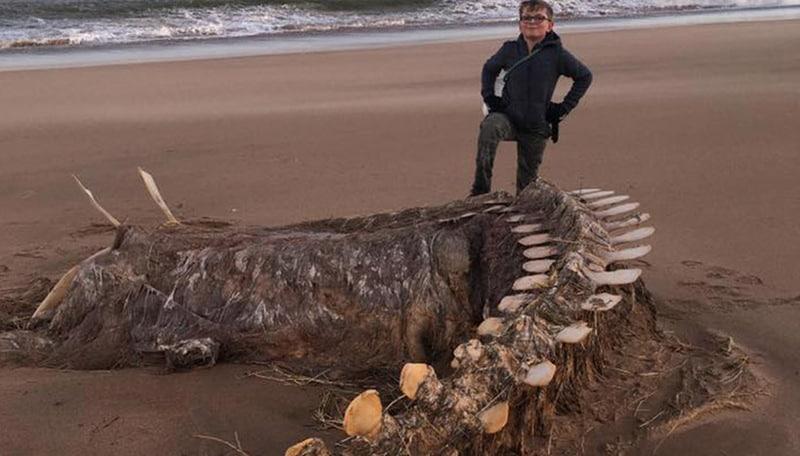 Il mistero del ritrovamento del mostro di Loch Ness: ecco perché era una bufala