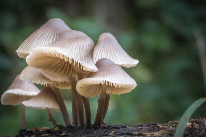 Scopriamo il magico mondo dei funghi!