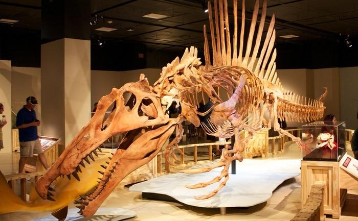 Scoop dal Cretaceo: lo Spinosauro era un dinosauro acquatico