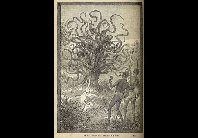 Piante carnivore: il mistero dell'albero mangia uomini del Madagascar
