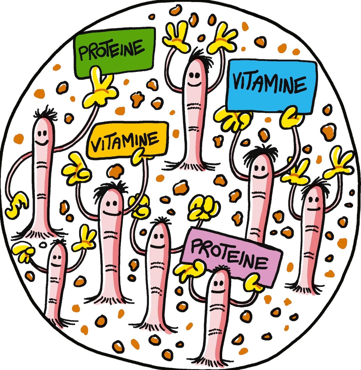 cibo e digestione