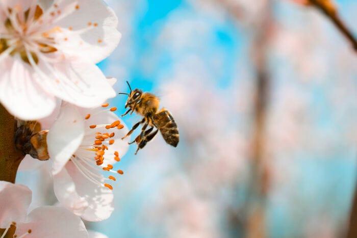 Natura e animali: I segreti delle api