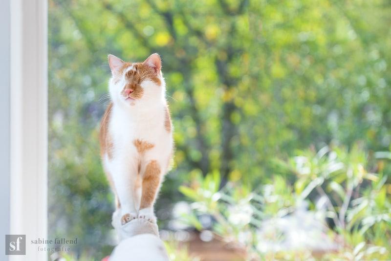 Il gatto Kauzo: la vera storia del felino senza occhi, ma che vede… con il cuore