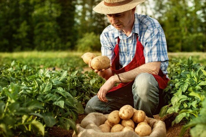 Agricoltura: che cos'è e perché è così importante
