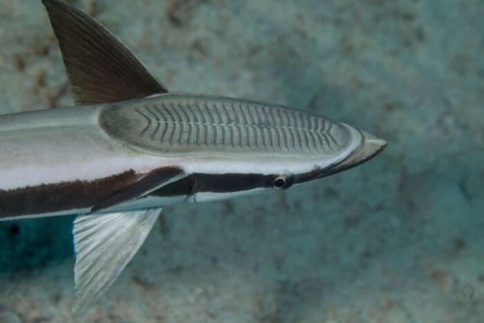 10 cose che (forse) non sai sui pesci