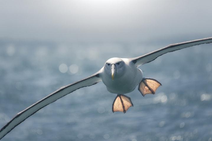 Tutti i segreti sul volo degli uccelli