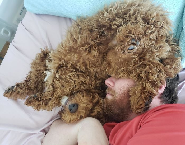 18 foto di papà che non volevano un pet in casa