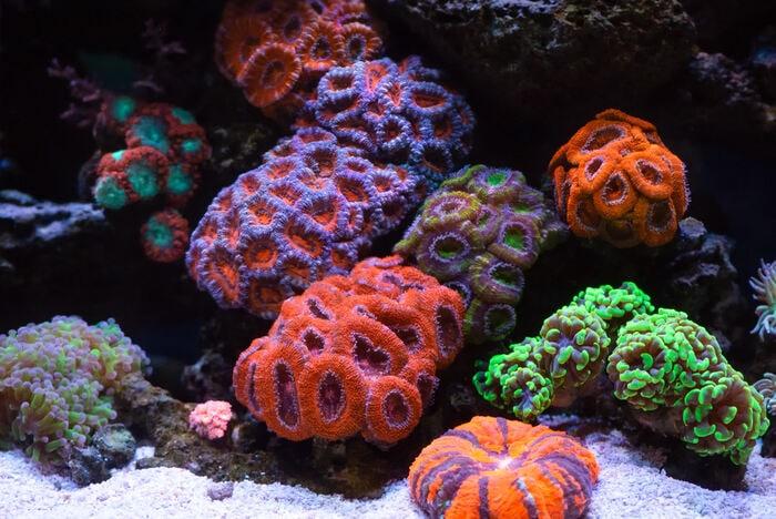 Cosa sono i coralli?