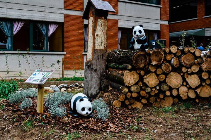 Aule Natura: l'iniziativa anti-Covid del WWF per aiutare la scuola
