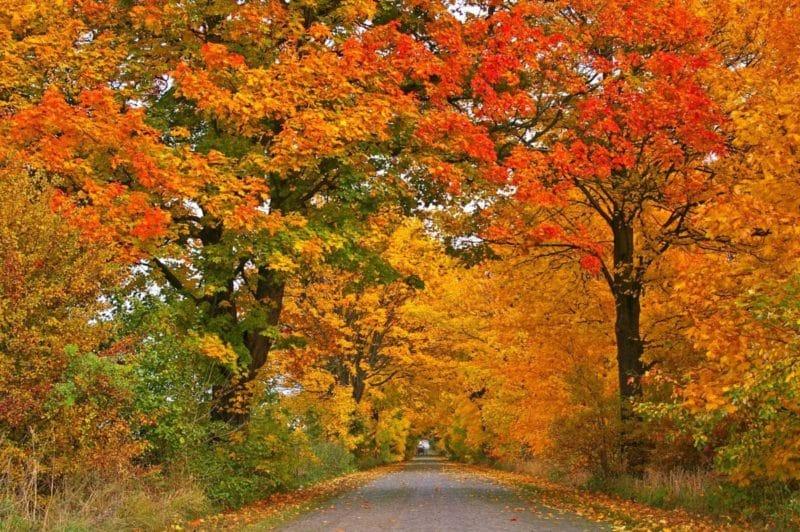 Dieci notizie interessanti sull'autunno