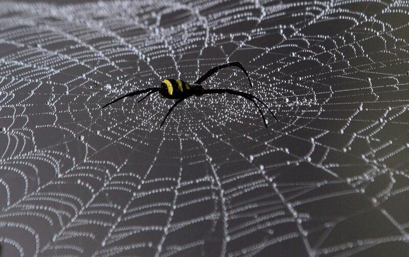 10 interessantissime curiosità sulle ragnatele