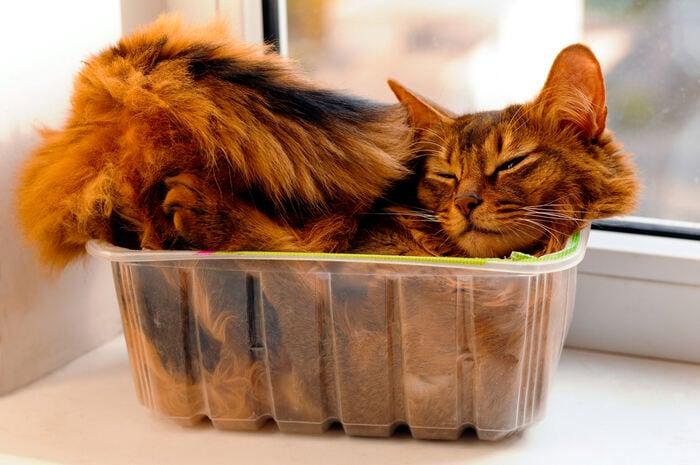 Perché ai gatti piace dormire ovunque tranne nella loro cuccia?