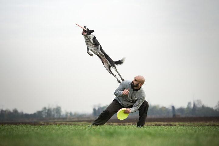 I video di Adrian Stoica: perché giocare con il nostro cane?
