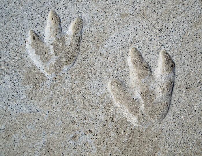 Impronte fossili sulle Alpi Apuane: appartengono a rettili vissuti 250 milioni di anni fa