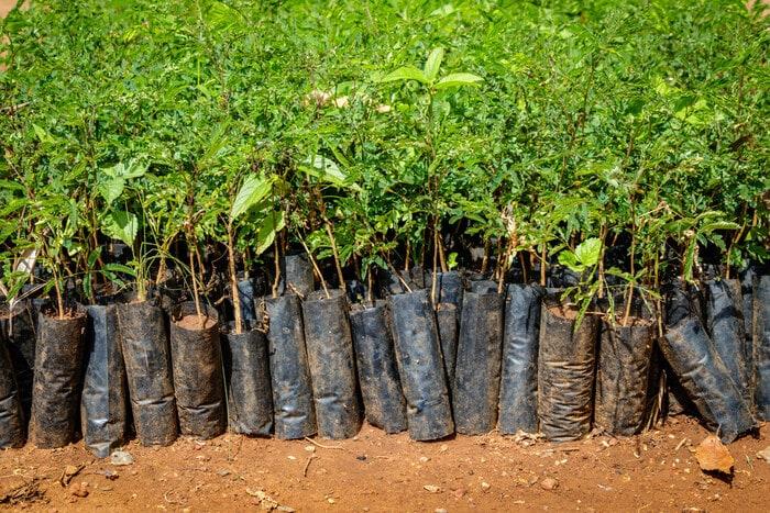 Tutela dell'ambiente: 10 cose da sapere sulla riforestazione