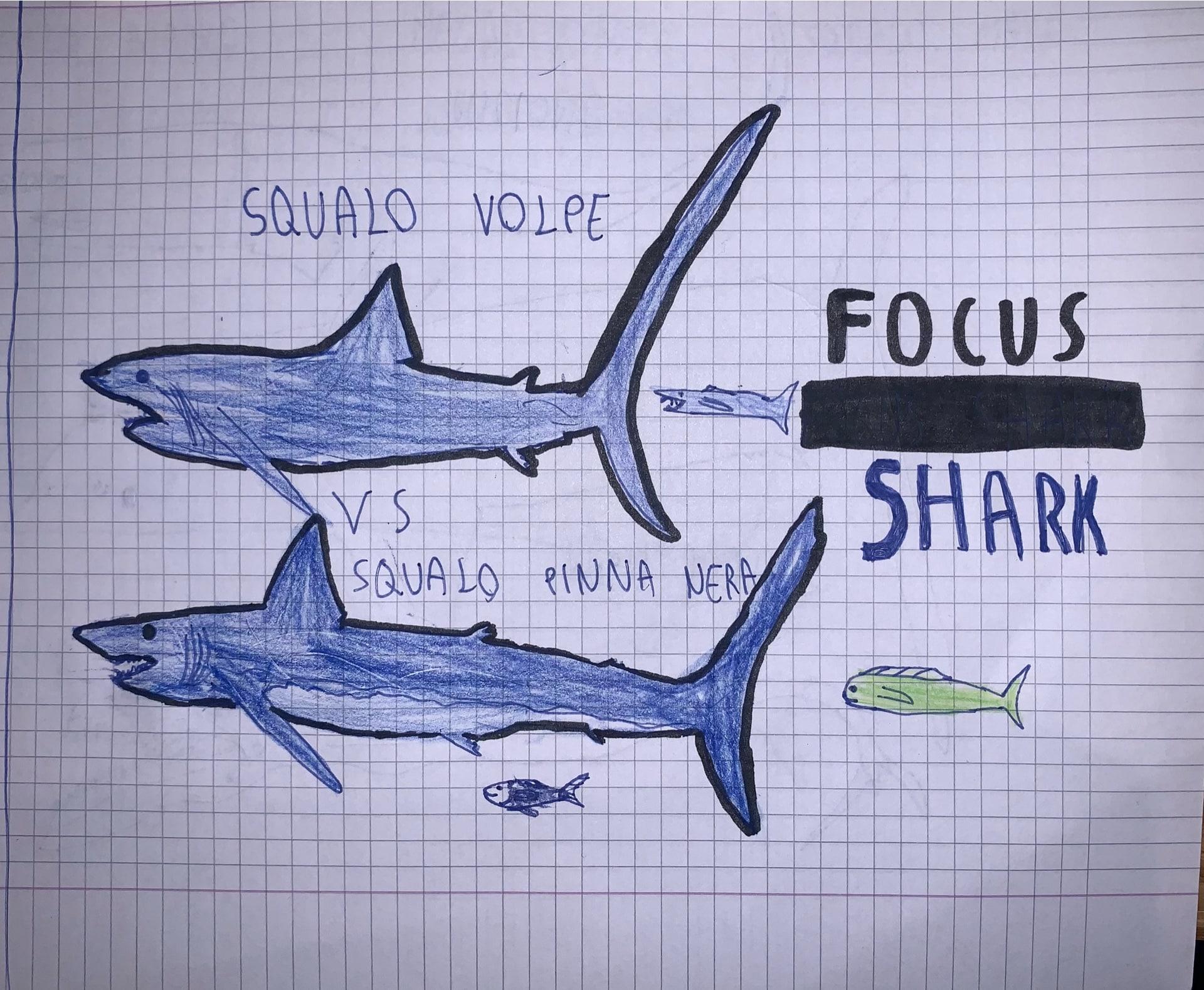 Gallery, i nostri amici animali nei disegni dei focusini 6