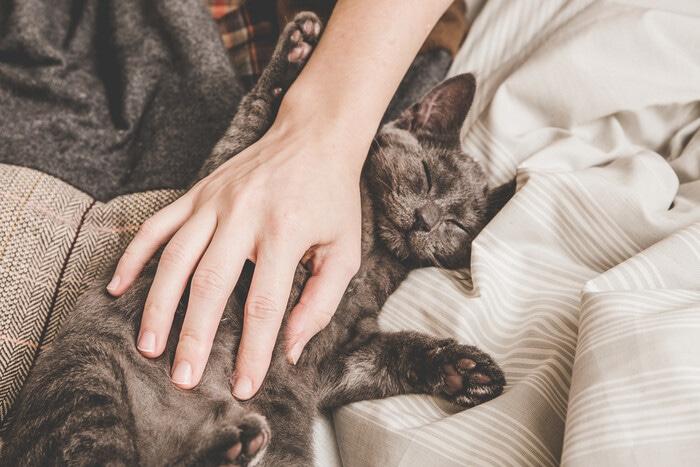 Come fare amicizia con il gatto: le regole per diventare inseparabili