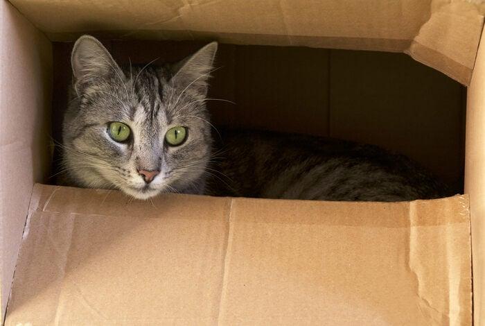 Gatti e scatole: il riciclo conviene anche ai nostri amici felini