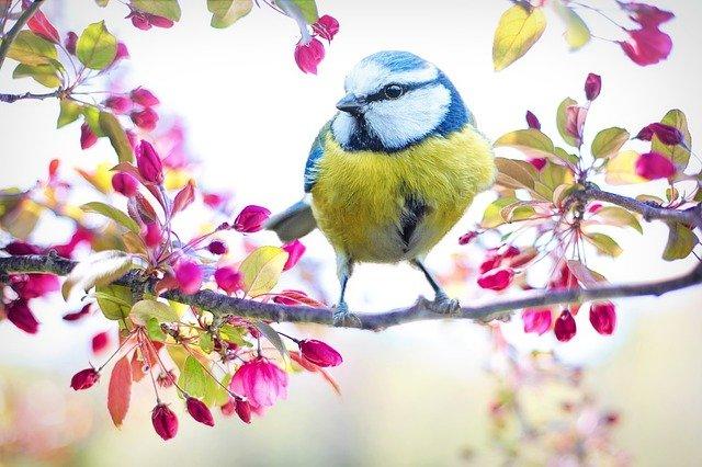 5 poesie e filastrocche sulla primavera
