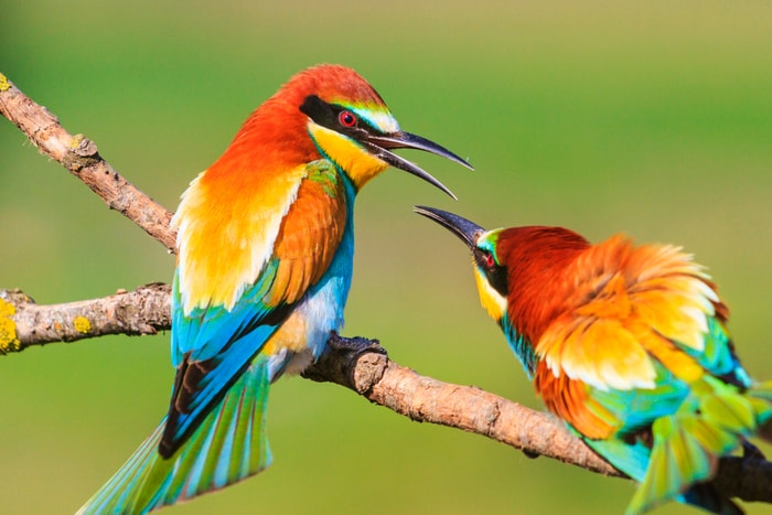 Cos'è la biodiversità?