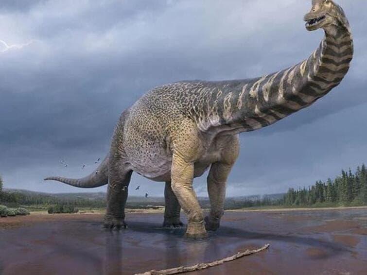 Cooper: trovato il più grande dinosauro d'Australia
