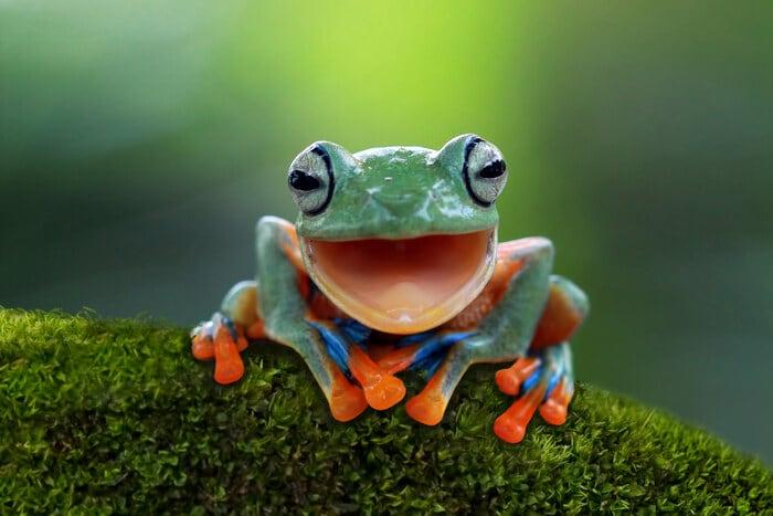 Indovinelli sugli animali: ecco i più belli