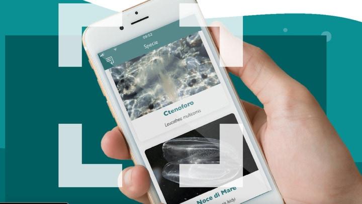 AvvistApp, l'app per aiutare i ricercatori a studiare le noci di mare