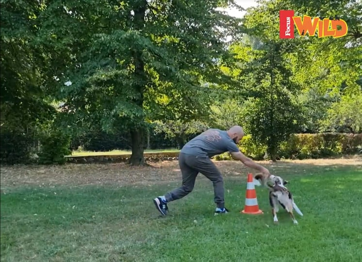 I video di Adrian Stoica: Vado, giro e torno (VIDEO)