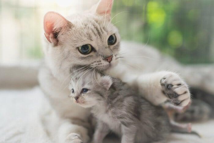 Aforismi sui gatti: le citazioni più belle