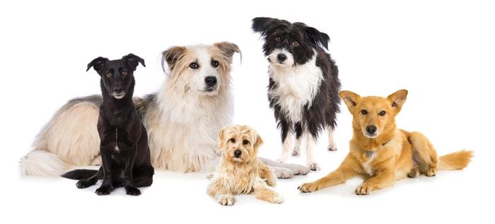 Come chiamo il mio cane? Ecco i nomi più popolari