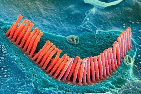 Esploriamo il corpo umano al microscopio