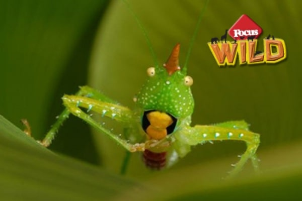 Curiosità animali: Gli straordinari animali del Suriname | Focus Wild