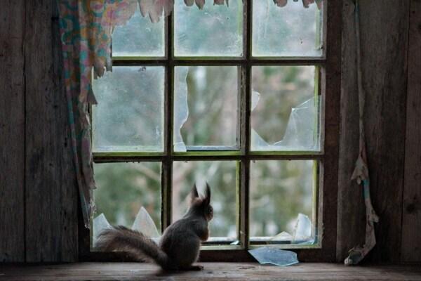 Curiosità animali: il villaggio abbandonato abitato da animali | Focus Wild