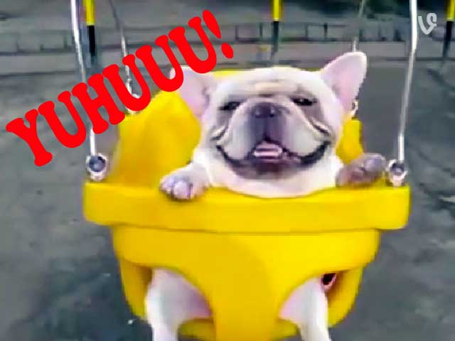 Animali da ridere. 5 mini video tenerissimi