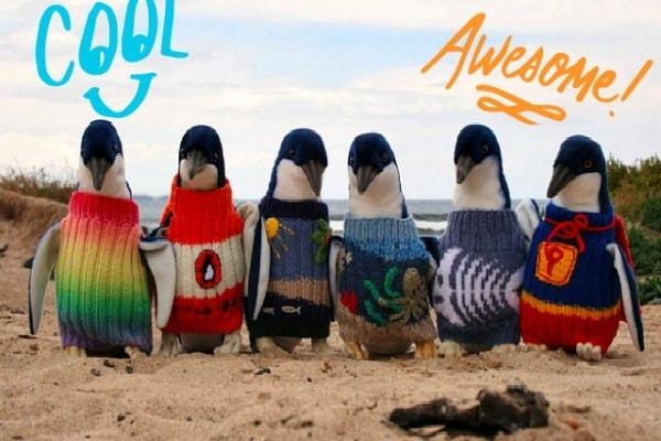 Pinguini Cool: un maglione per salvarsi dal petrolio!