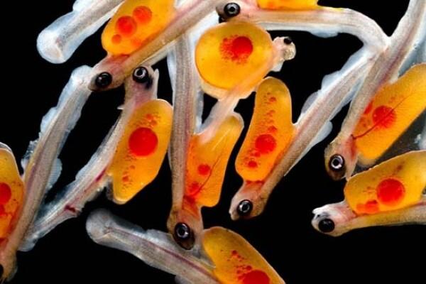 Foto microscopiche | Alla scoperta di un mondo meraviglioso e piccolissimo!
