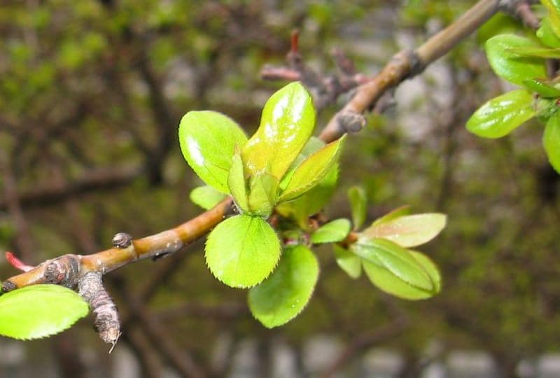 Facciamo primavera! Scatta la tua foto che racconta la primavera e inviacela!