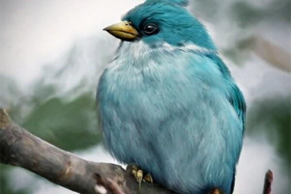 Angry Birds: i personaggi del gioco diventano reali!