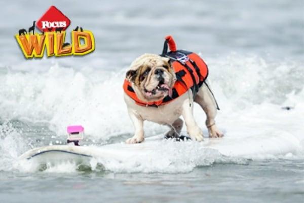Curiosità animali: Sport da cani | Focus Wild